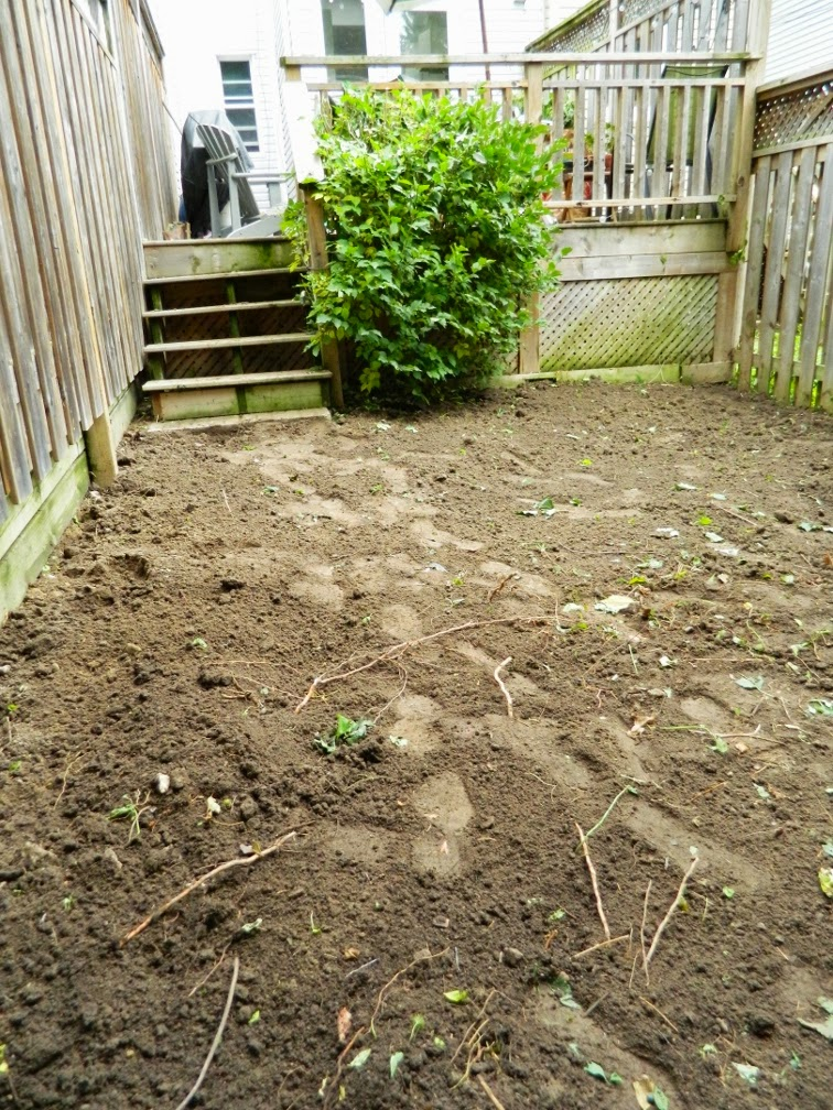 Toronto backyard garden cleanup Woodfield Rd. after  Paul Jung Gardening Services