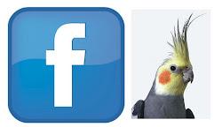 Calopsitas Belas Facebook