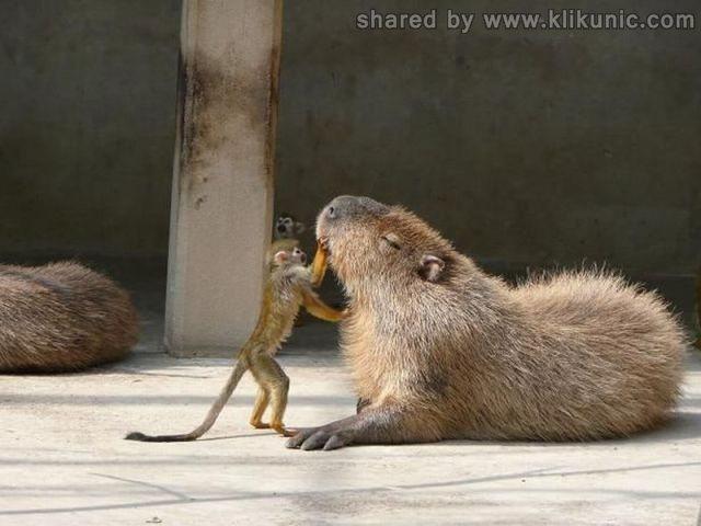 http://1.bp.blogspot.com/-7ducZERrcyw/TXlnI-kGdHI/AAAAAAAAQy4/0sT-IMc4H64/s1600/these_funny_animals_635_640_05.jpg