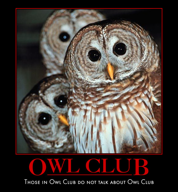 Owl demotivational poster collection