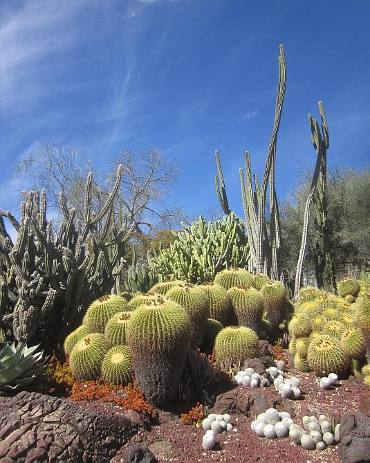 Huntington Botanic Gardens, Cacti, Succulents, Desert Garden