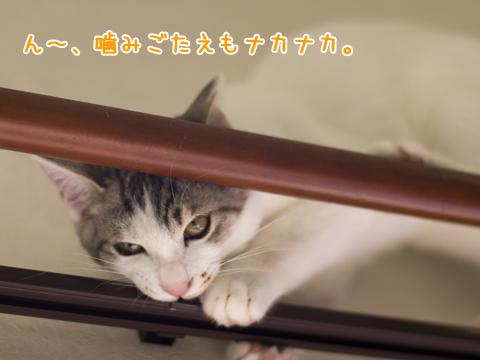 悪い顔の子猫