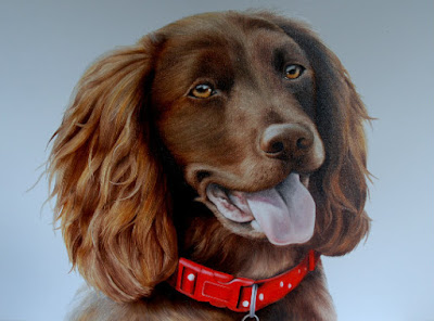 Pet Portrait Cocker Spaniel