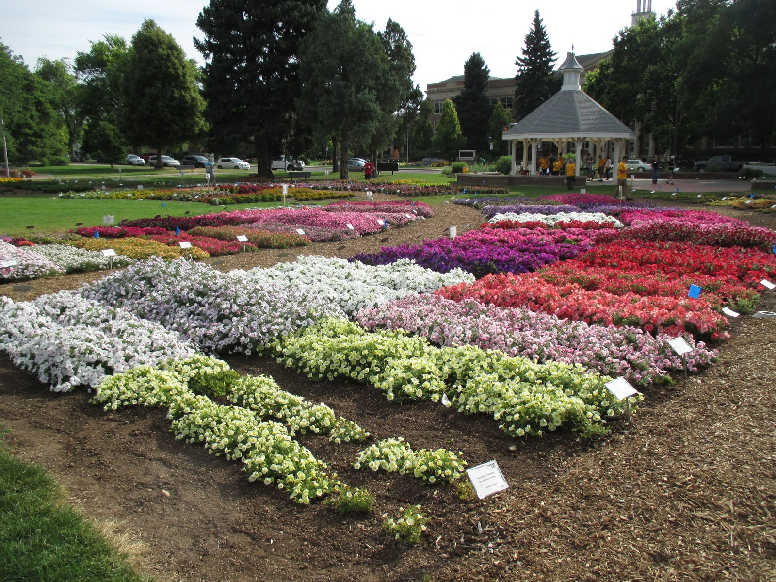 With The Bulk Of The Day Saved For Travel From Colorado To Iowa (9.5 Hours  Of Driving), I Snuck Over To The Colorado State University Trial Gardens  (Fort ...