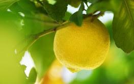 5 Bahan Mudah Untuk Bersihkan Toksin Dalam Hati