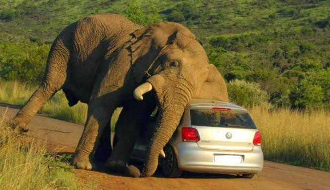 Gajah Gatal
