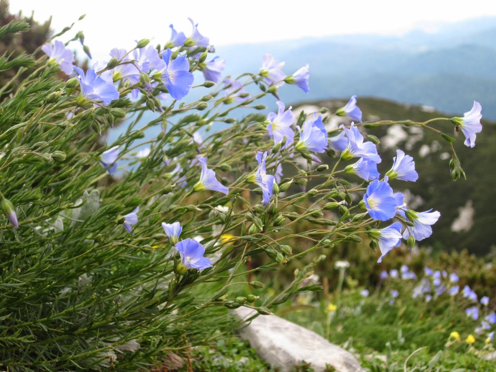 Concorso fotografico: Flora e paesaggi naturali del Litorale Austriaco e dei territori contermini
