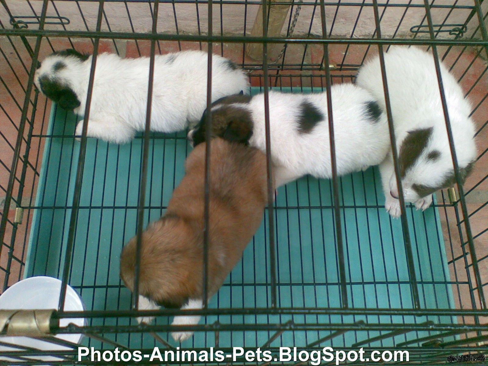 http://1.bp.blogspot.com/-7fXd0QTXQDA/TmIYLSzH_NI/AAAAAAAAB6E/TIMliet4O1U/s1600/Puppy%2Bpictures_0002.jpg