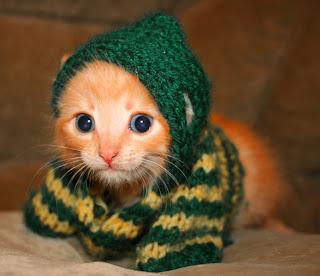 fotos tiernas de gatitos