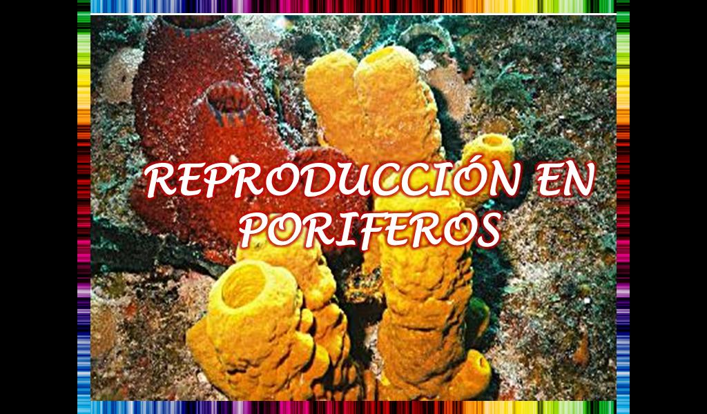 Reproducción en Poriferos   ENIGMAS DE LA VIDA