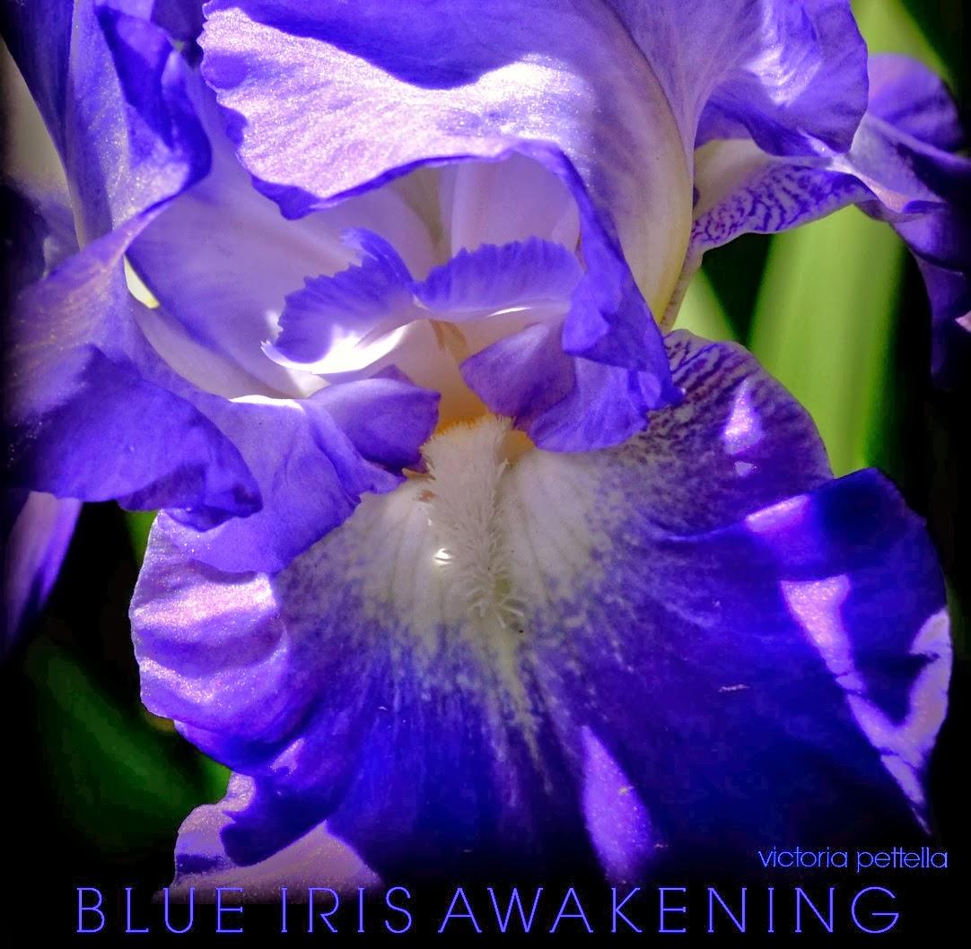 BLUE IRIS MEDITATIONS