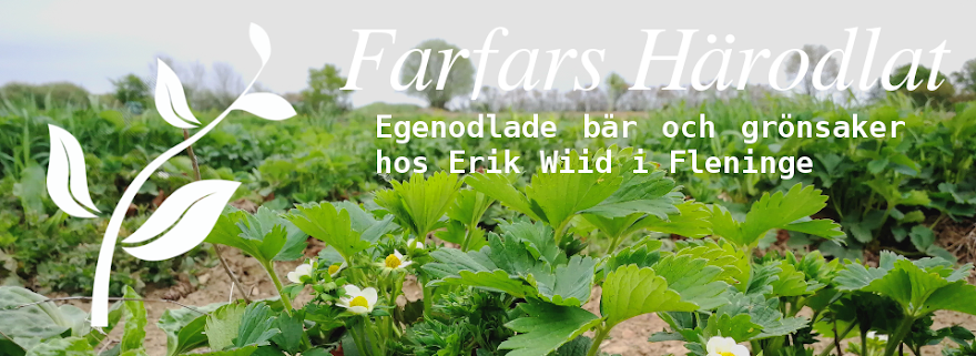 Farfars Härodlat - Egenodlade bär och grönsaker hos familjen Wiid i Fleninge