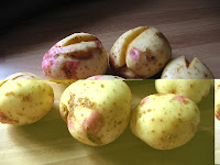 Picaso main crop potatoes