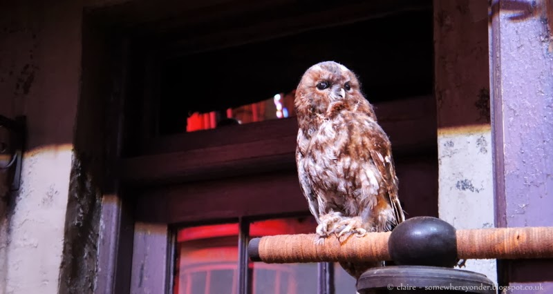 Owl in Diagon Alley - Harry Potter Warner Bros Studio Tour, Watford