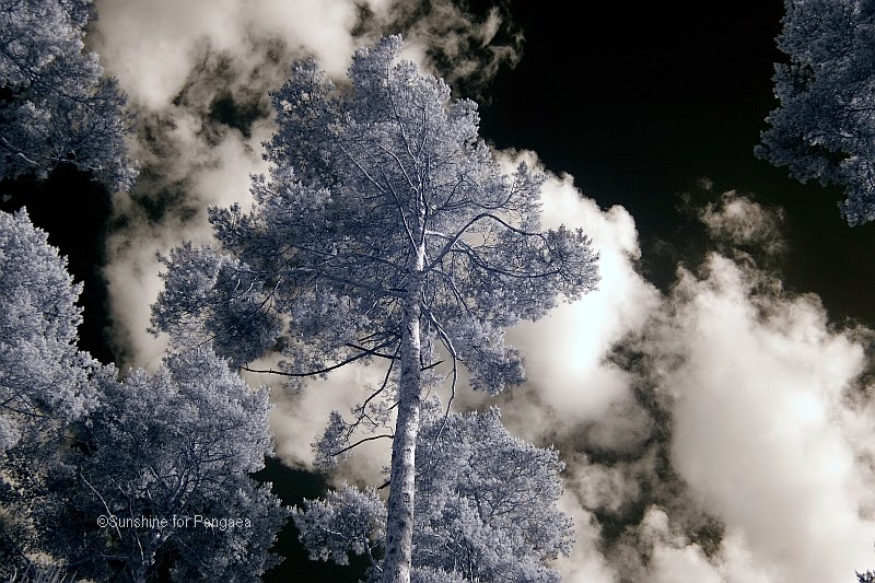 Skyview in infrared light