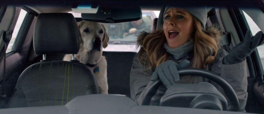 Um Cachorro Para Dois Torrent Imagem