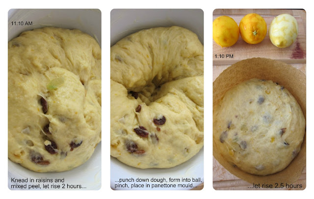 Panettone, Revisited