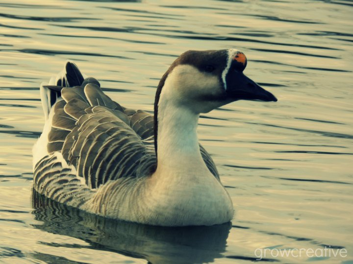 duck pond photography: grow creative