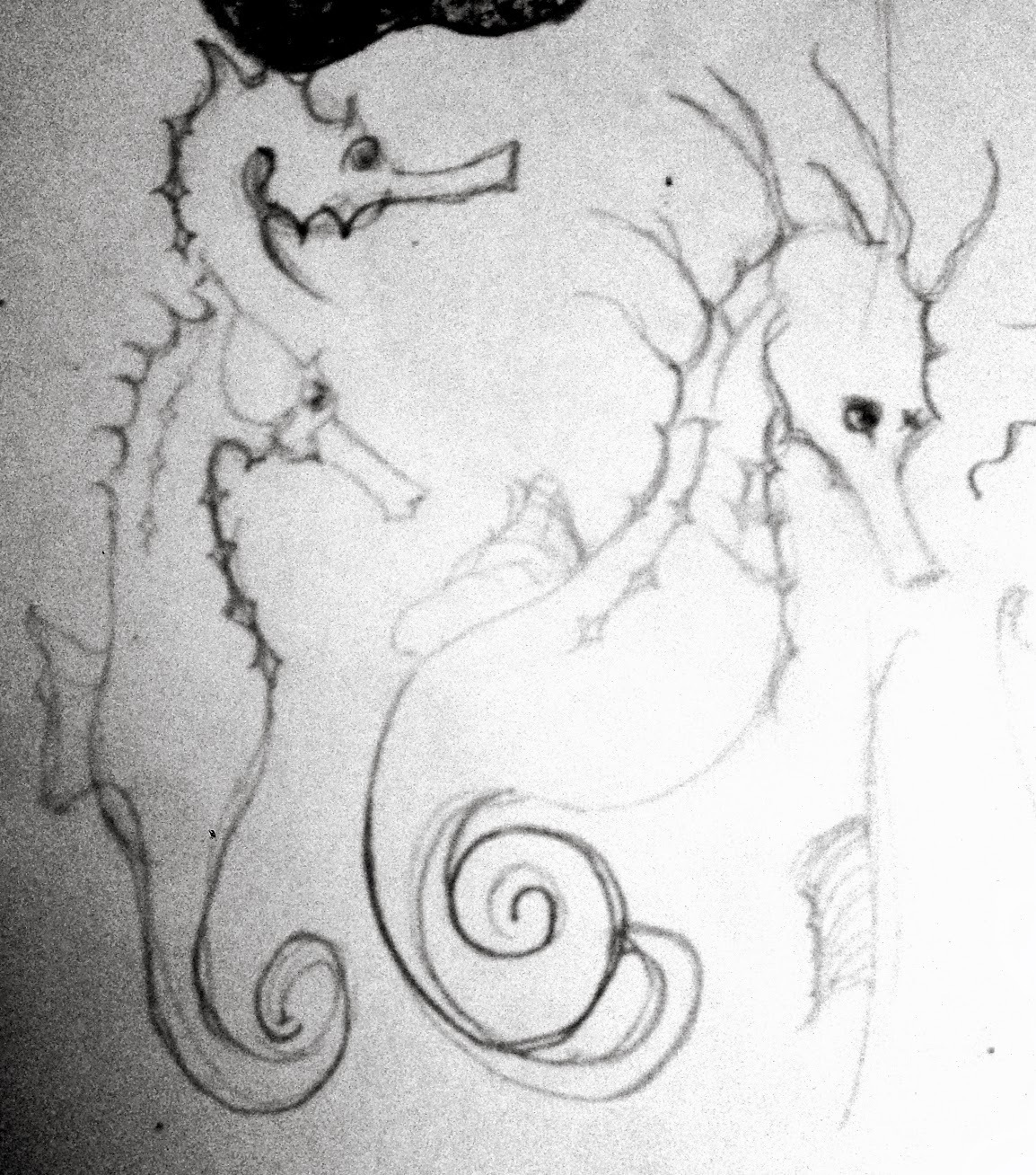 pin cute seahorse coloring pages on pinterest