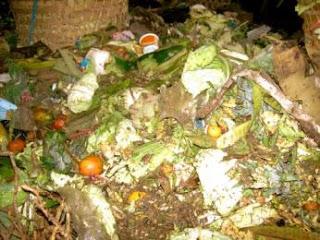 Contoh Sampah Organik