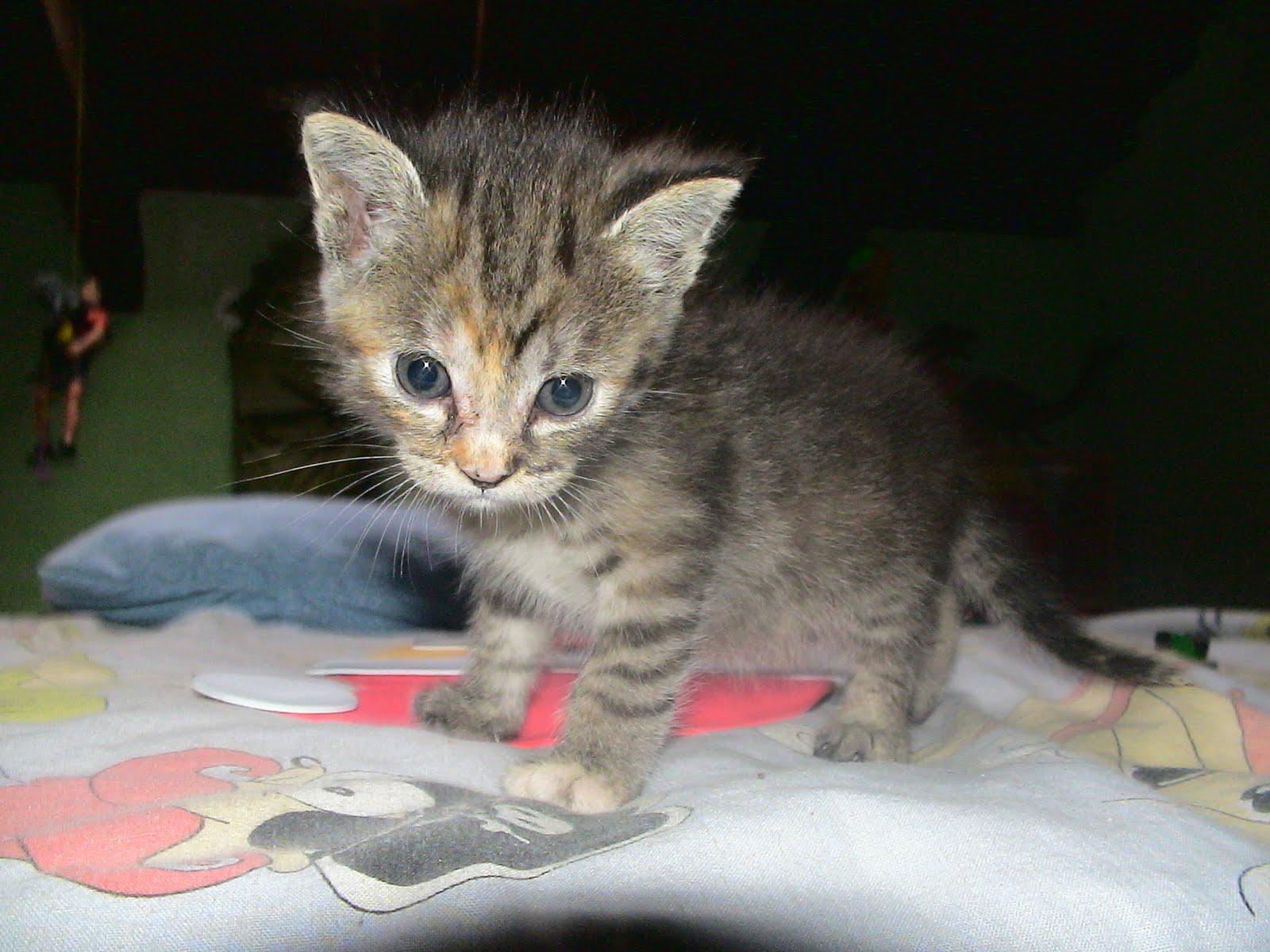 Han matado a una madre y sus gatitos mediavida - Gatitos de un mes ...