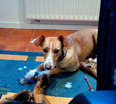 Destrozando mis juguetes