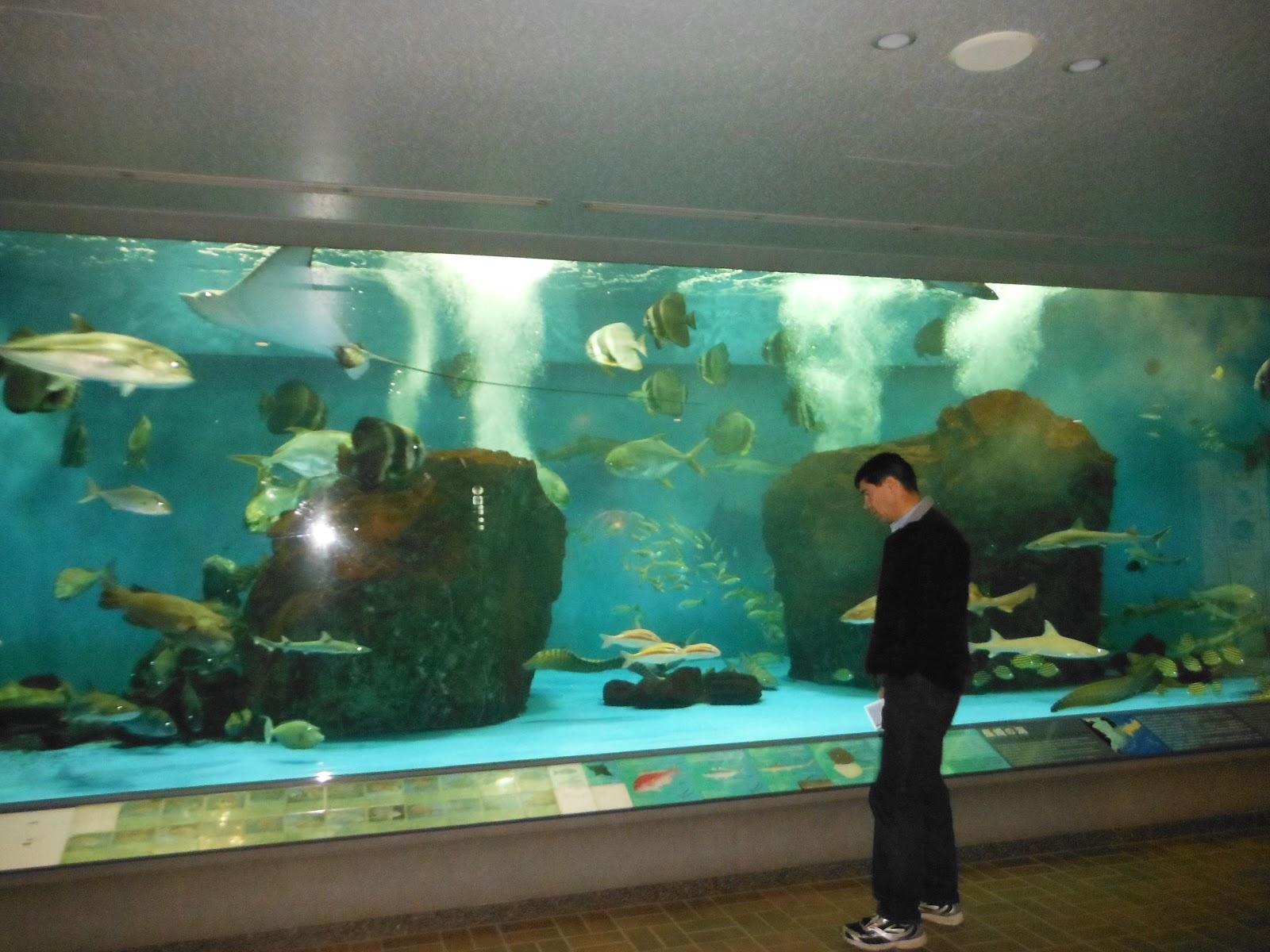 big aquarium - photo #10