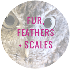 FUR FEATHERS + SCALES