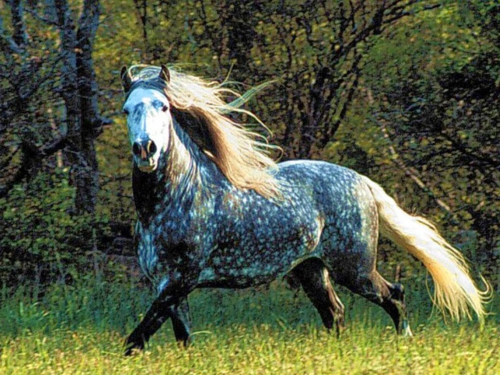 Horses beautiful nature wallpaper 23445393 fanpop -  1 Had To Throw A Little Bit Of Weirdness In There Eh