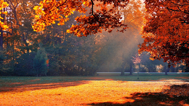 Autumn park sunshine HD Wallpaper