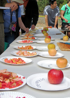 Plates upon plates of apples cut for tasting