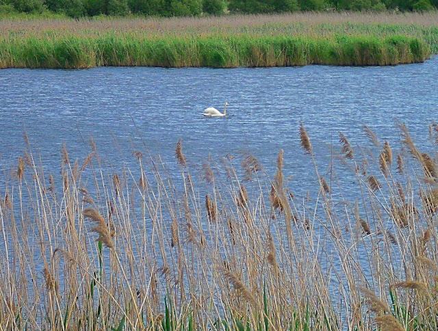 Reserva Marismas Blancas en Astillero