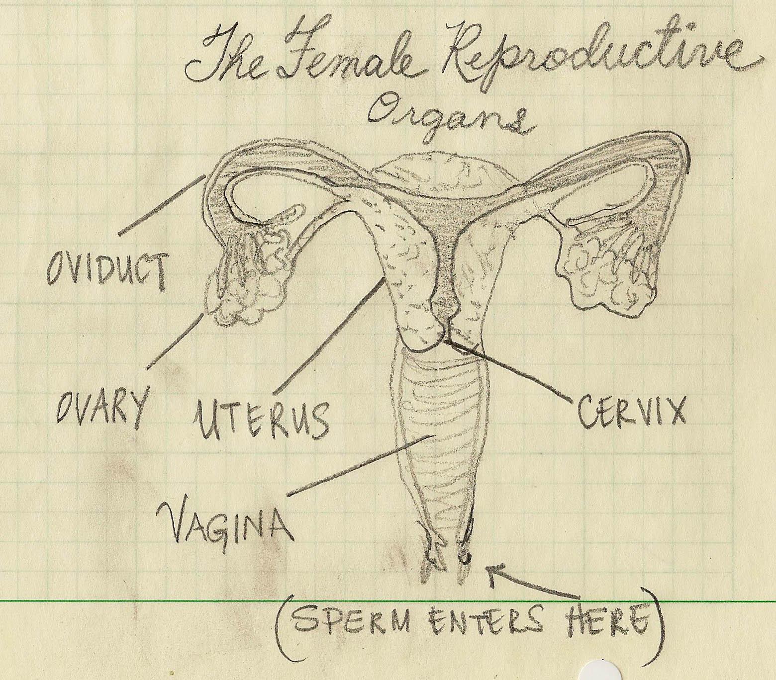 http://1.bp.blogspot.com/-7irB36UDtvs/Tvyjr1fk14I/AAAAAAAABEA/T1WBYwGM-KM/s1600/Female%2Breproductive%2Borgans%2Bcopy_1.jpg