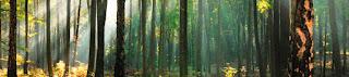 foto panorámica bosques de cariló