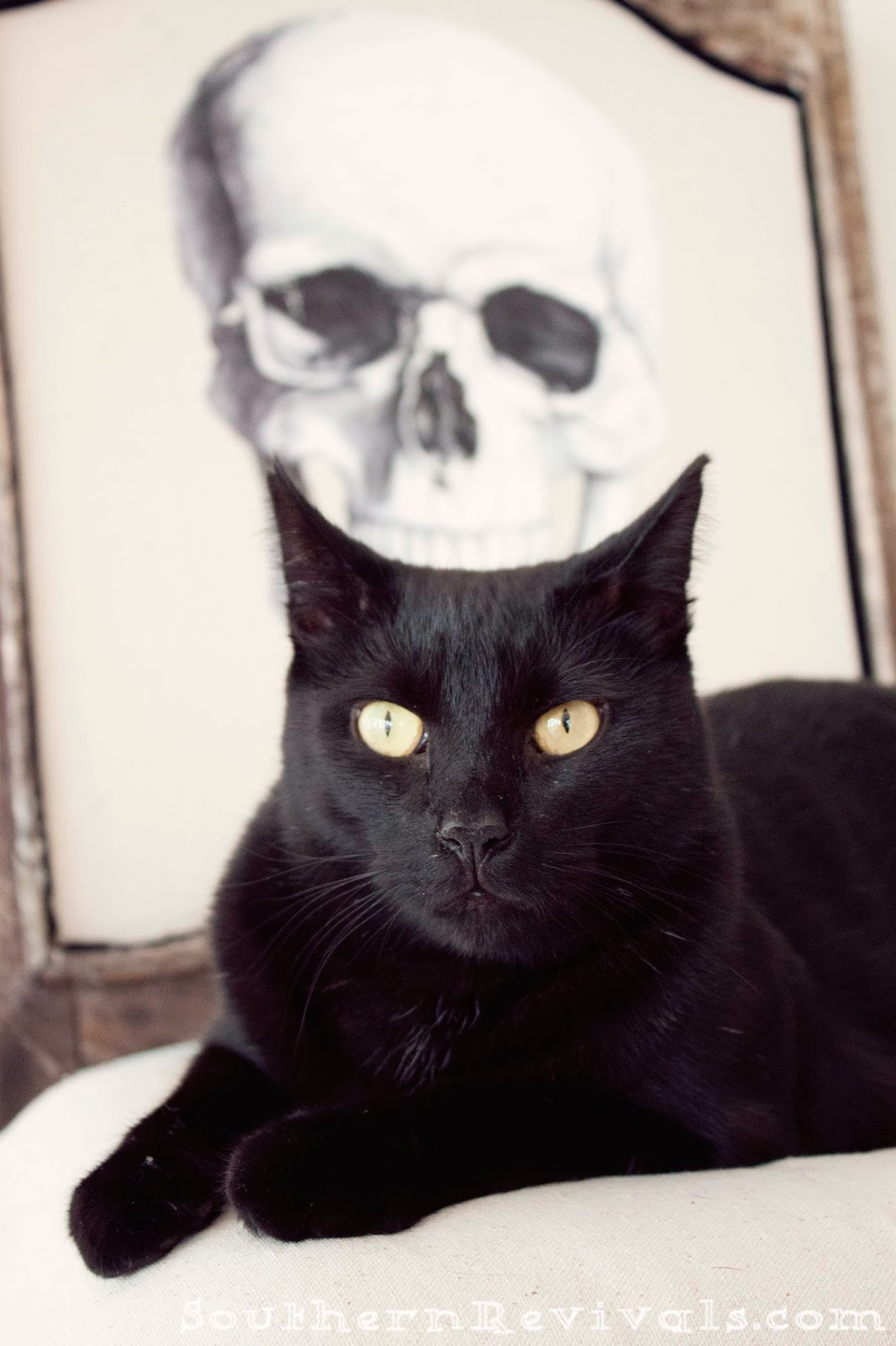 Black skull chair - Diy Halloween Skull Skeleton Chair Makeover Redo Upcycle