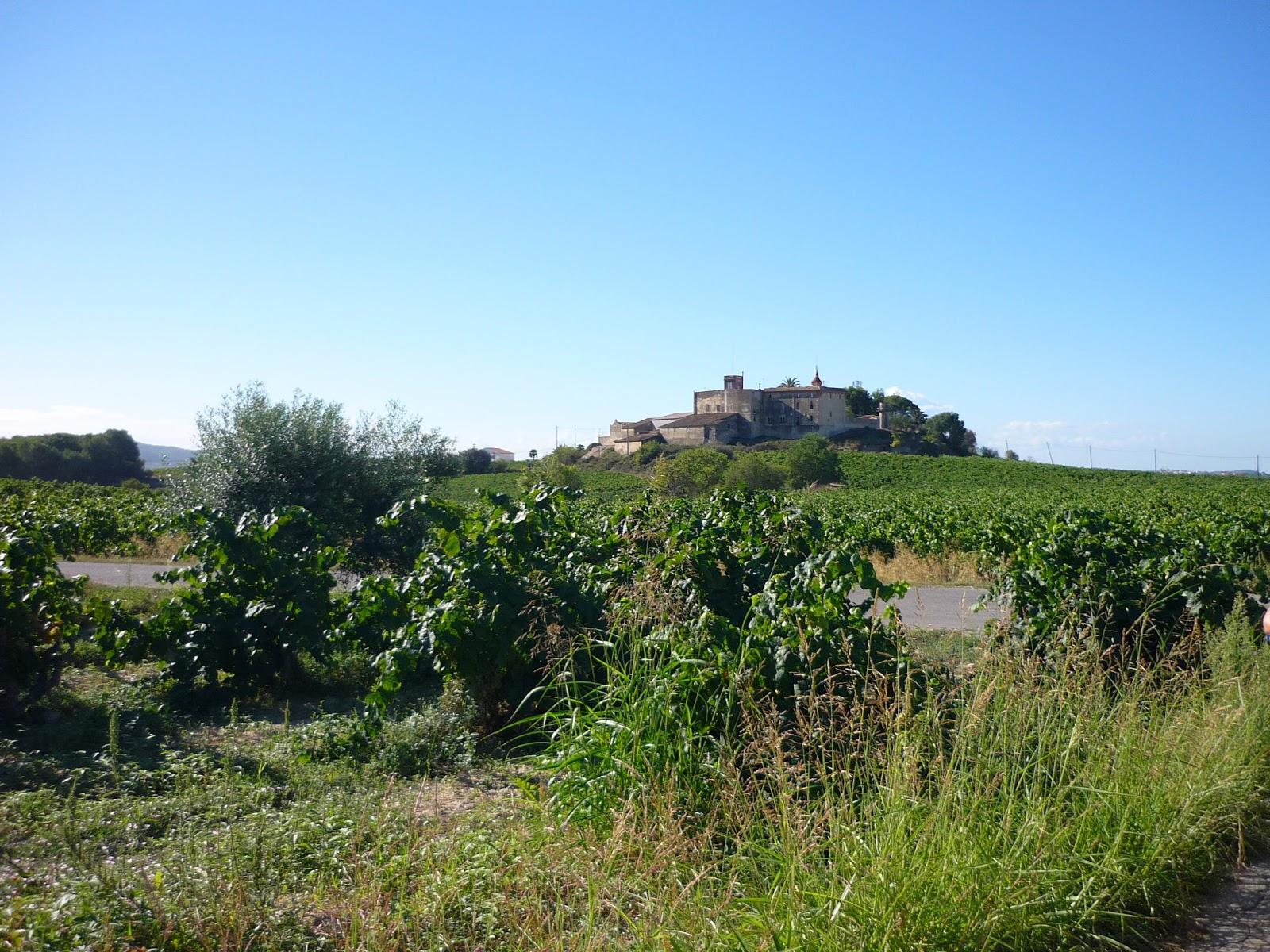 Blog Go Tandem - campos viñedos L'Arboç