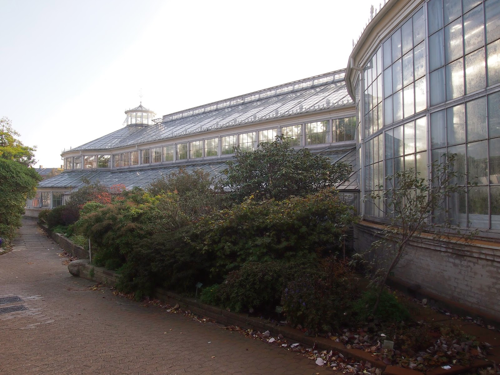 A Glasshouse at the Botanical Garden in Copenhagen