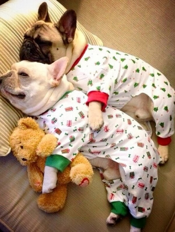 Cute dogs - part 6 (50 pics), two dogs sleep wearing pajamas