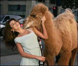 funny camel photos girl tattoos designs gallery funny