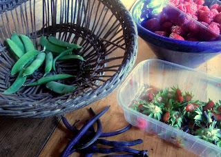 garden harvest france