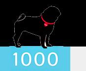 1000Pugs