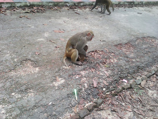 monkey in safari park