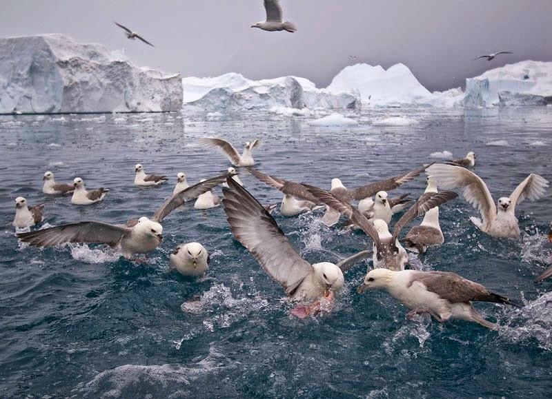 Observer les Oiseaux en Islande