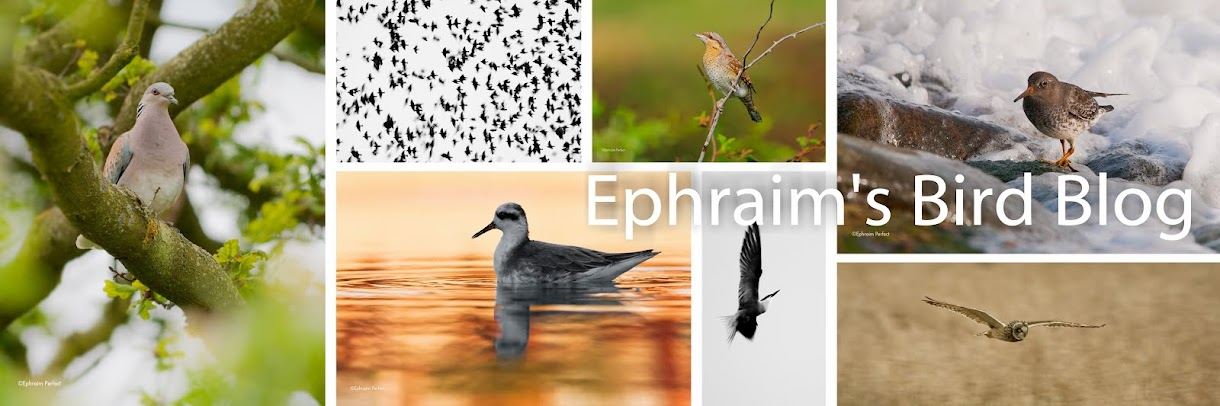 Ephraim's Bird Blog