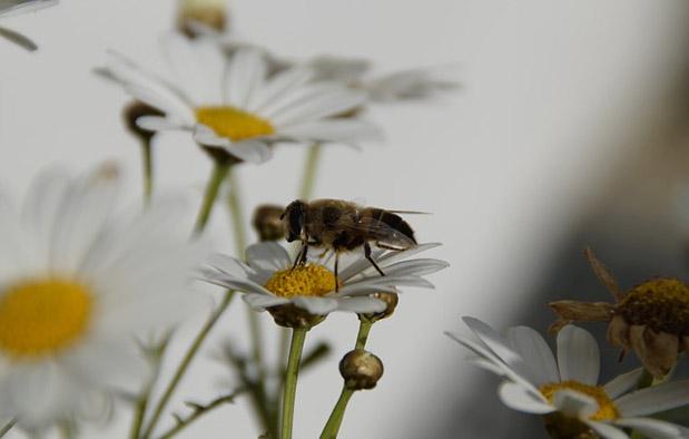 Interaksi dalam Ekosistem simbiosis mutualisme