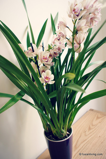 Phoenix Orchid / Cymbidium Orchid