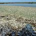 Contaminación con amoniaco mata miles de peces en río en Wuhan, China