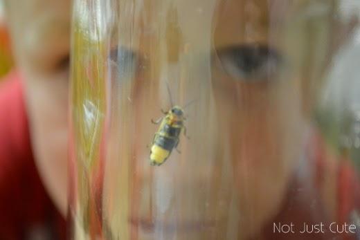 تعليم الأطفال عن الحشرات