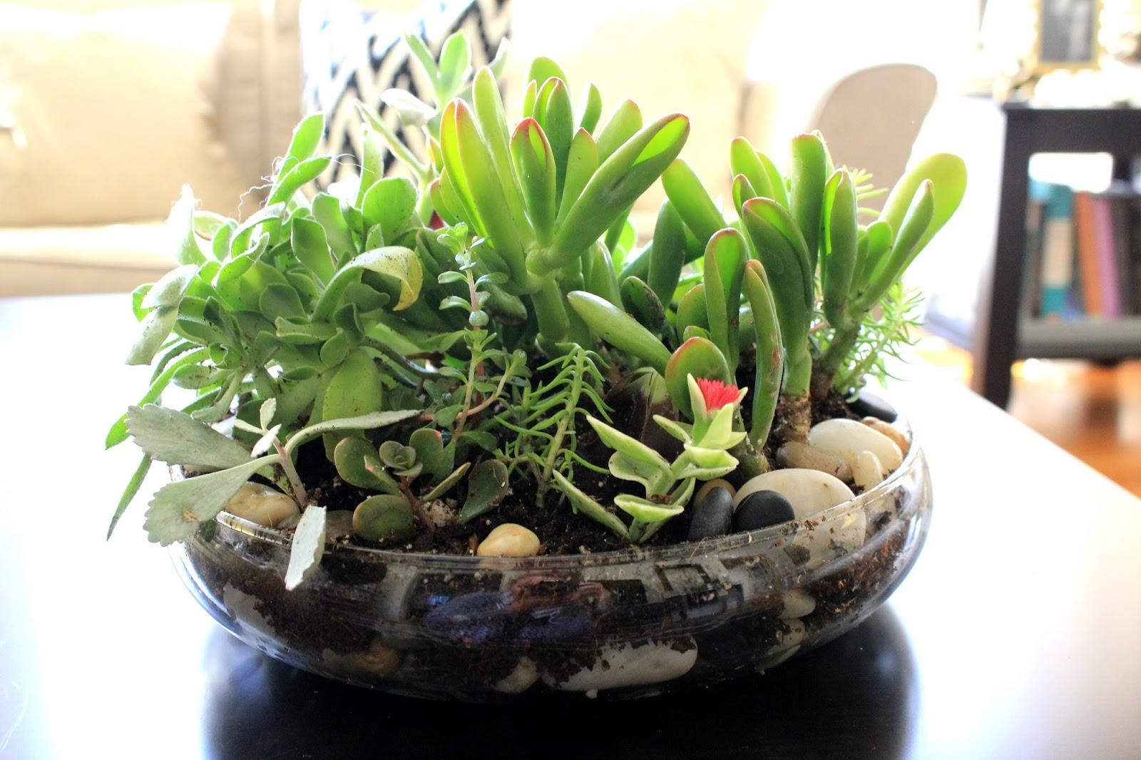 Cup Half Full Succulent Terrarium Diy