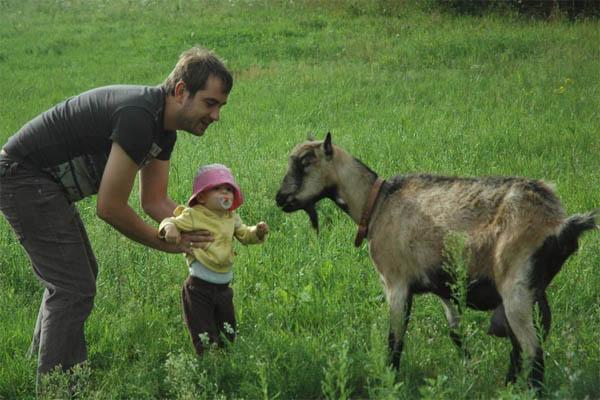 padre con su hijo jugando con cabra
